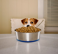 Food Allergies in Pets