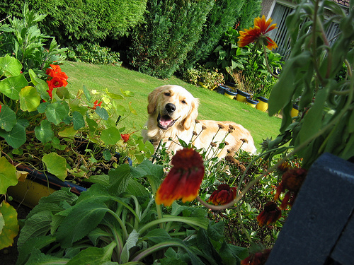 keeping your dog safe in your garden Archives | Naperville ...
