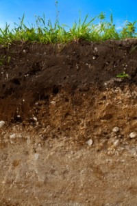A cut of soil
