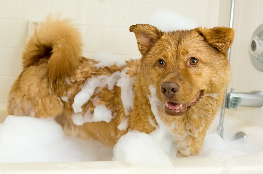 Animal care archives naperville animal hospital naperville il dog taking a bath solutioingenieria Choice Image
