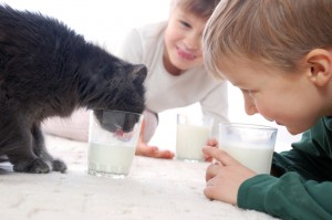 they all like milk