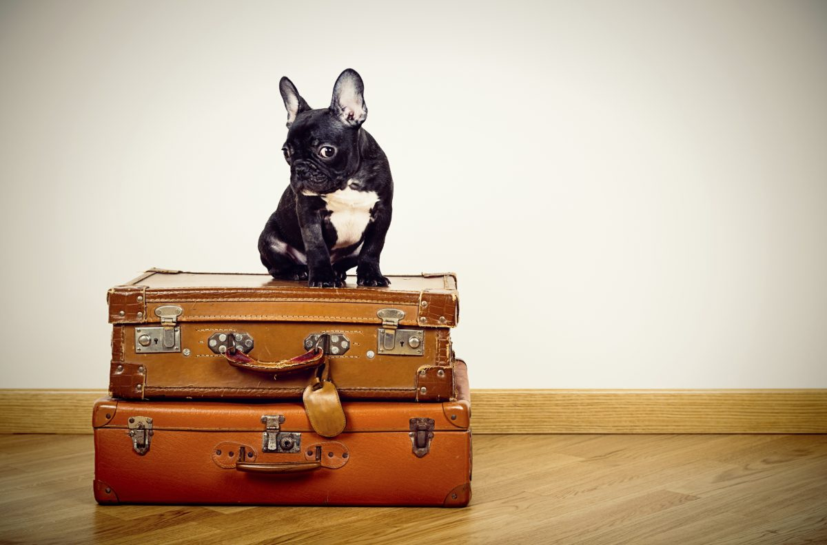 Planning the Ultimate Dog Friendly Vacation | Naperville ...