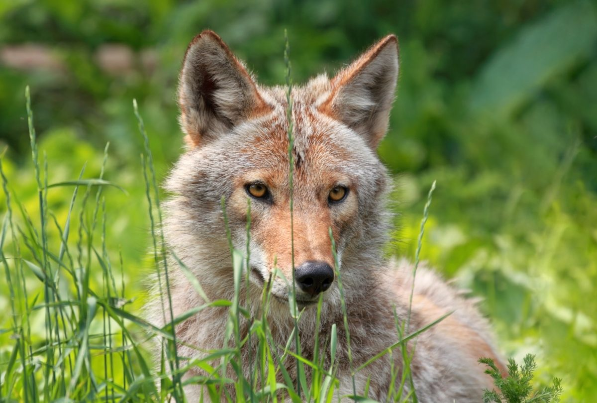 Coexisting with wildlife how to keep pets safe from - Garden grove dog and cat hospital ...
