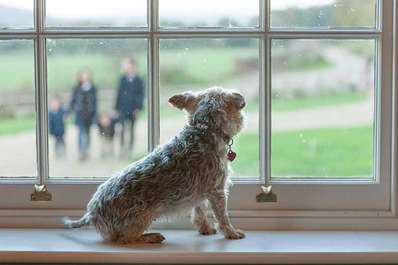 Pet anxiety can intensify when kids go to school and your pet is bored.