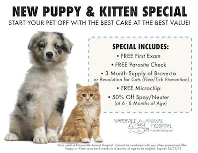 New Pets Puppy Kitten Care From The Pet Experts At Naperville Animal Hospital