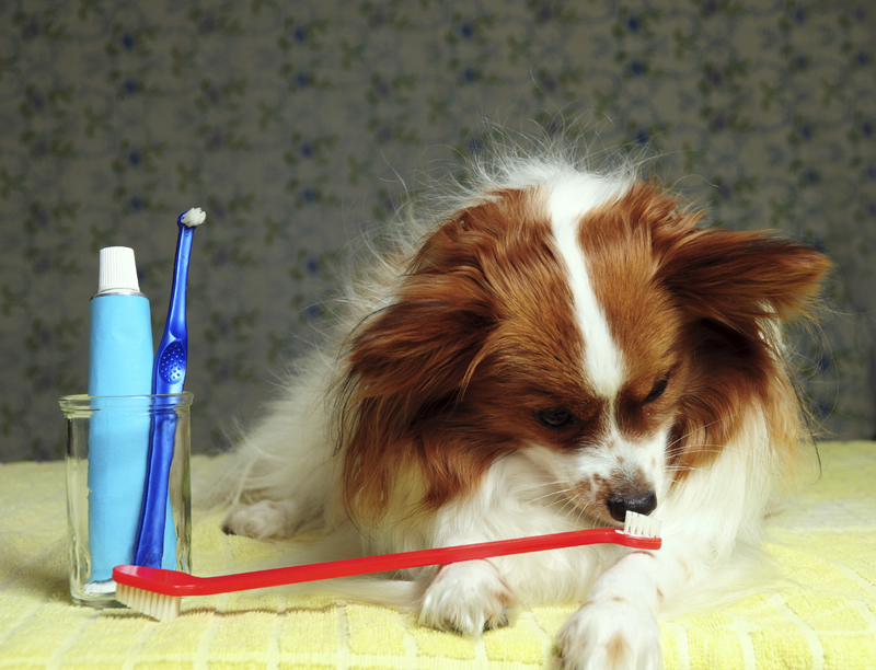 dog sniffing toothbrush